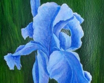 """Blue Iris Flower Art - """"Blue Bayou"""""""
