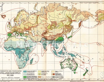 1897 Distribution of the most Important Plant Types around the World at the end of the 19th Century Original Antique Statistical Map