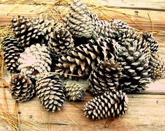 20 Natural Pine Cones Medium Large for Crafting Art Projects Bird Feeders--ON SALE