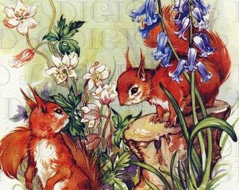 Red SQUIRRELS!! Vintage Digital Animal Download. Vintage DIGITAL Squirrel Illustration. Digital Printable Squirrel Image. Vintage Flowers.