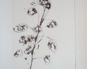 Honesty / Lunaria - A Monochrome Lithograph