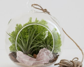 Large Rose Quartz Terrarium Kit with Two Plants and Chartreuse Moss
