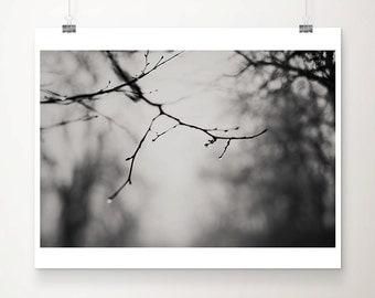 tree photograph rain photograph winter photograph nature photography black and white photography dark art dark photography