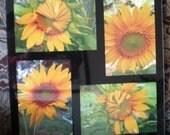 CaptureMoments!  Sunflowers :)