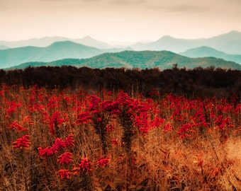 Mountain Photography - Flower photography - Red - Gold - Wall Art
