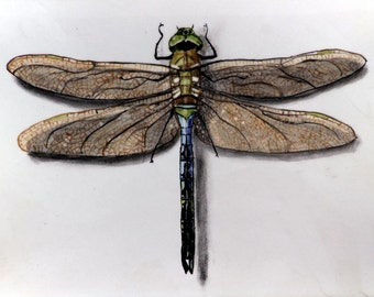 Giclee Print of a Dragonfly
