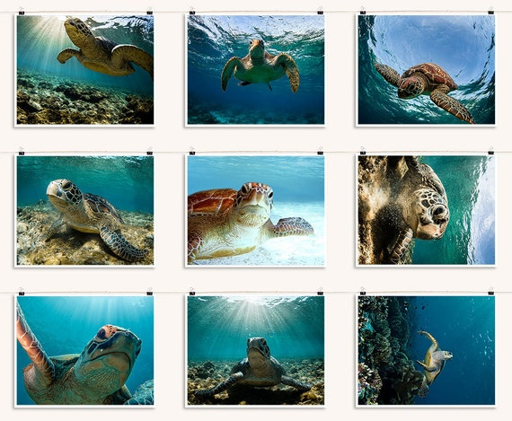 Sea Turtle Portraits - Coral Reef Underwater Photography - Large Wall Art Decor - Summer Vacation Decor - Nine 8 x 10 inch Photo Prints