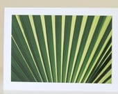 Palm Lines Photography Card, Geometric Tropical Plant Print, Green Botanical Photo