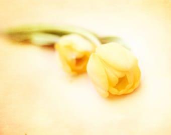 Dreamy Fine Art Photography Print, Yellow Tulips Home Decor, Nursery Floral Prints Wall Art- Take Me Away Tulip Print