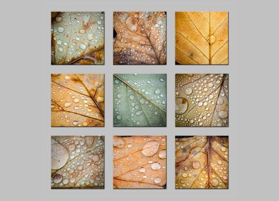 FREE SHIPPING. Fine Art Metal Prints. Fall Leaves with Rain Drops on nine panels. Macro Nature Photography.