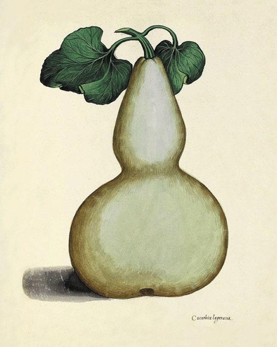 Items similar to Pumpkin art kitchen art print antique ...