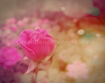 rose bud. flower photography. summer ethereal romantic