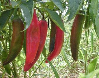 "Organic Heirloom ""Anaheim Chile"" - sweet pepper - gardening seed pack"