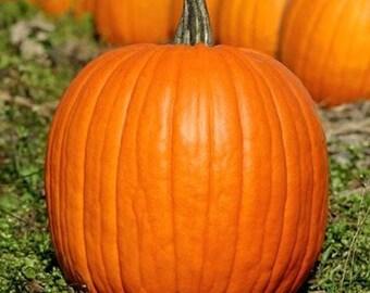 30 - Heirloom Pumpkin Seeds - Jack O Lantern - Heirloom Vegetable Seeds, Jack O Lantern Pumpkin Seeds, Carving Pumpkin Seeds, Non-gmo Seeds