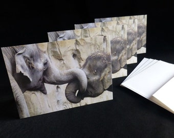 Gift for Elephant Lover ~  Cute Elephant Note Cards ~ Animal Photography ~ Set of 4 All Occasion Blank Cards with Envelopes ~ Greeting Cards