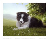 Border Collie Puppy, Daisy. Limited Edition Print. Personally signed and numbered by Award Winning Artist JOHN SILVER. jsfa018