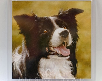 Coaster, Border Collie Portrait. From an Original Painting by Award Winning Artist JOHN SILVER. Bcc006