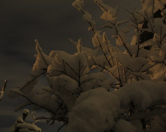 Moonlight Snow (3) - Digital Photo for Download - A Snow scene on a Beautiful Moonlight night - Jerusalem mountains. Nature Scene photo