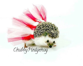"Tutu ""PRETTY IN PINK"" Hedgehog /  Guinea pig"