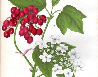 1846 Antique Botanical print Fruit Cranberry  Monthly Flora Magazine Home Decor