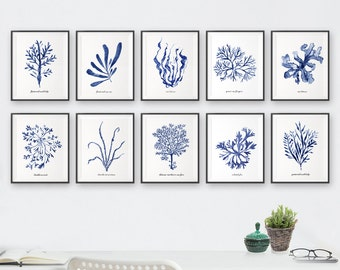Watercolor painting, Coastal art, Seaweed print, Bathroom decor, Set of 10, Blue and white wall art, Summer decor, Ocean decor, Ocean print