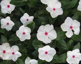 Vinca- Periwinkle- Bright Eyes- 50 Seeds