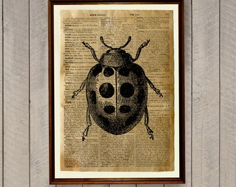 Botanical poster Ladybird decor Insects print WA273