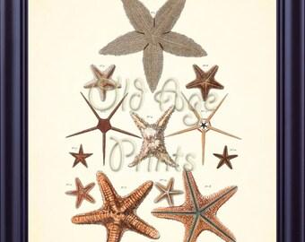 Antique SEBA STARFISH Star Fish Print 8x10 Art Print Sea Ocean Creatures Nautical Vintage Plate Beach House Coastal Art Wall Decor OL0607