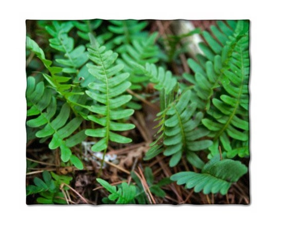 Fleece Blanket, Brown and Green, Nature Photo, Fern Plant, Throw Blanket, Home Decor, Minnesota Plants, Natural Colors, Lap Blanket