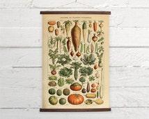 Vintage Vegetables Larousse Natural History Pumpkin  Kitchen Decor Canvas Poster Print Wooden  Wall Chart Size A3 16x11