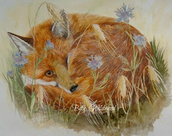 Summer Fox...  Limited edition Giclee print