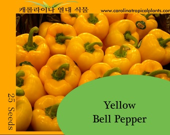 Yellow Bell Pepper seeds - 25