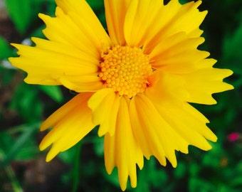 Still Life Photography**Flower Print** Nature**Macro lens**Yellow Flower**Garden Photography**Sun