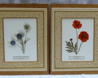 Real Pressed Flower Botanical Herbarium Specimen Art Collection Set 11 x 14 with Hand Painted Mats