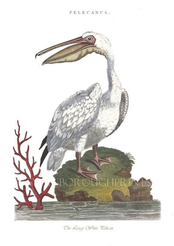 Items Similar To Coastal Decor Bird Print Pelican Print