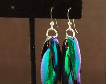 Genuine Beetle Wing Earrings from the Green jewel beetle Sternocera