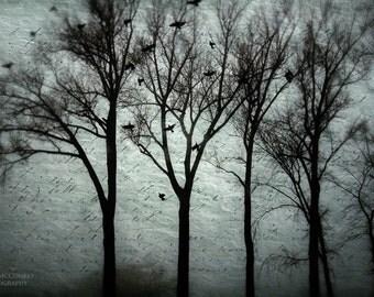 fog mist fine art photography dream teal trees woodland print home decor