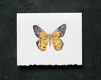 The DAY FLYING MOTH Card and Envelope - Blank Interior, Post-Consumer Recycled Paper, Butterfly