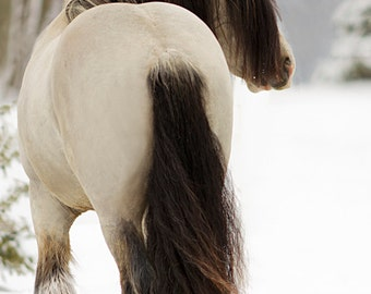 Horse in the Snow Photography, Horse Photo, Horse Picture, Picture of Horse in Snow, Gypsy Vanner,  Winter Horse Landcape