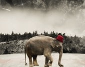 Elephant Art Print Animal Photography Wild Animal Art Circus Photo Surreal Photo International Shipping 8x10 PRINT - Master of Ceremonies