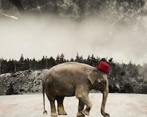 Elephant Art Print Animal Photography Wild Animal Art Circus Photo Surreal Photo International Shipping Print - Master of Ceremonies