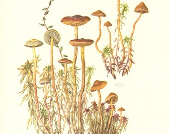 1963 Mushrooms, Galerina Species Vintage Offset Lithograph