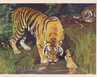 """G. Nikolsky """"Tiger"""" Postcard -- 1961, Izogiz Publ."""