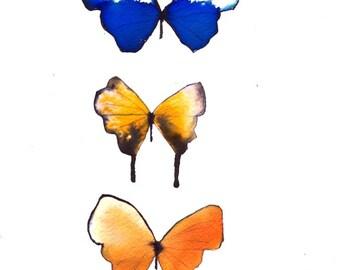 "butterfly trio orange, yellow, ultramarine blue and white 8 X 10"" original watercolour painting"