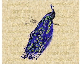 Purple peacock bird print Instant digital download image for Iron on fabric transfer burlap decoupage pillows decals tote bags No. 2169