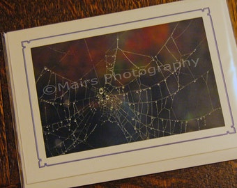 Spider Web with Dew Fall Color Nature Sparkle, Original Photograph, Eco-Friendly Birthday Card, Photo Card, Blank Card, All Occasion Card