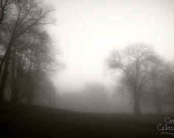 Digital download -  misty autumn trees photography art wall decor nature minimalist grey cream silouette park mystical dark
