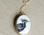 Pileated Woodpecker Locket Antique Brass Setting 14k Gold-Filled Chain