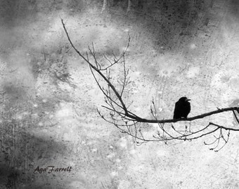 Black and White Photography, Surreal Art, Large Wall Art Nature Photography, Animal Print, Crow on the Tree Branch, Black and White Art