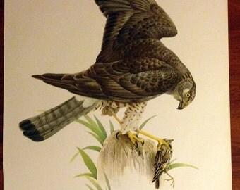 JF Lansdowne Print Book Plate Art, Marsh Hawk